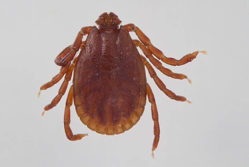 tick control services in Camden